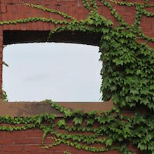 Ivy Brick Window