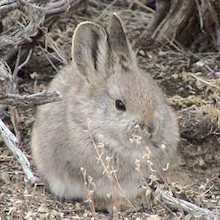 Geiger: Seriously. Bunnies.