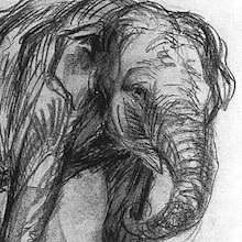 Marc-elephant