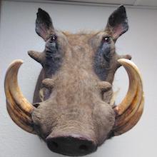 Gaines: CSI Natural History Museum