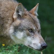 Heisman: Hybrid Howlers