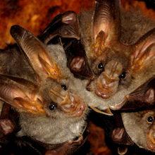 Zaske: Right Off the Bat